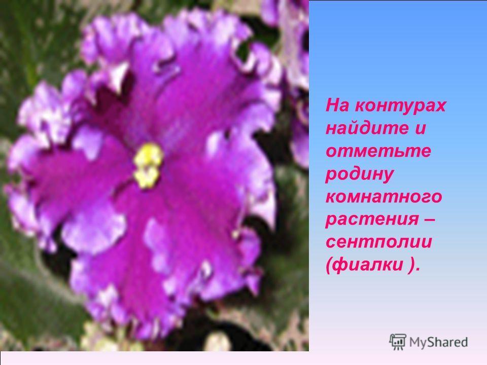 На контурах найдите и отметьте родину комнатного растения – сентполии (фиалки ).