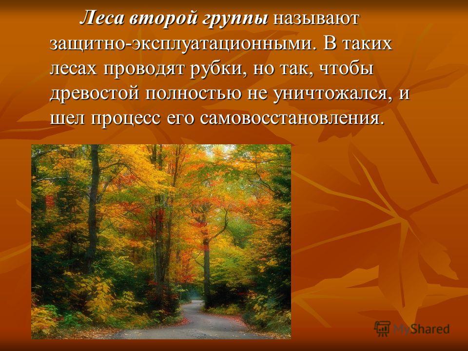 Леса второй группы называют защитно-эксплуатационными. В таких лесах проводят рубки, но так, чтобы древостой полностью не уничтожался, и шел процесс его самовосстановления. Леса второй группы называют защитно-эксплуатационными. В таких лесах проводят