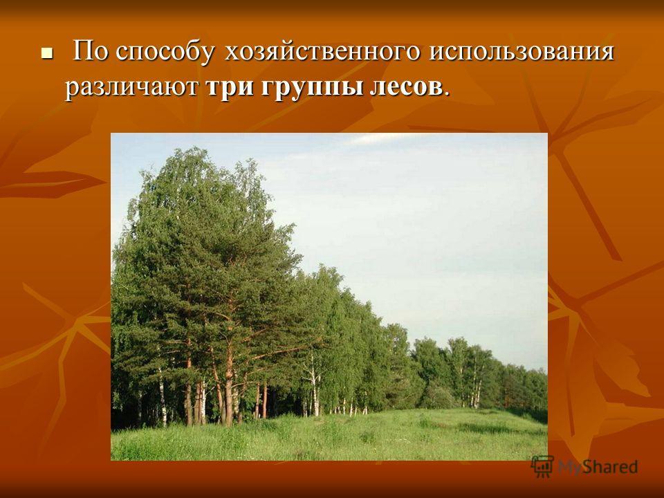 По способу хозяйственного использования различают три группы лесов. По способу хозяйственного использования различают три группы лесов.