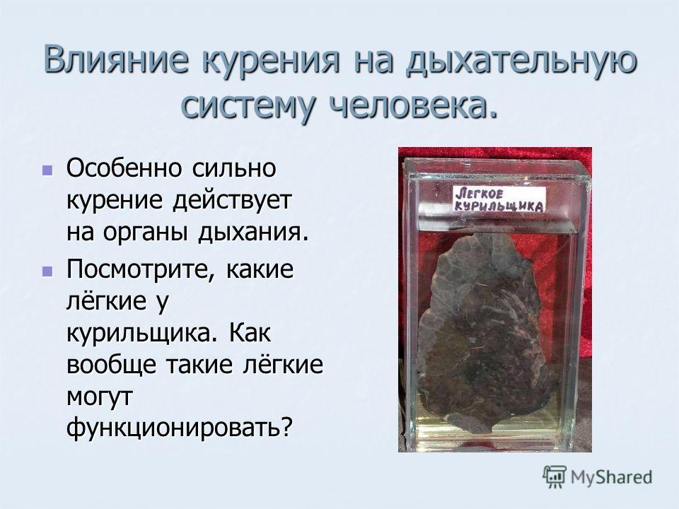 Влияние курения на дыхательную систему человека. Особенно сильно курение действует на органы дыхания. Особенно сильно курение действует на органы дыхания. Посмотрите, какие лёгкие у курильщика. Как вообще такие лёгкие могут функционировать? Посмотрит