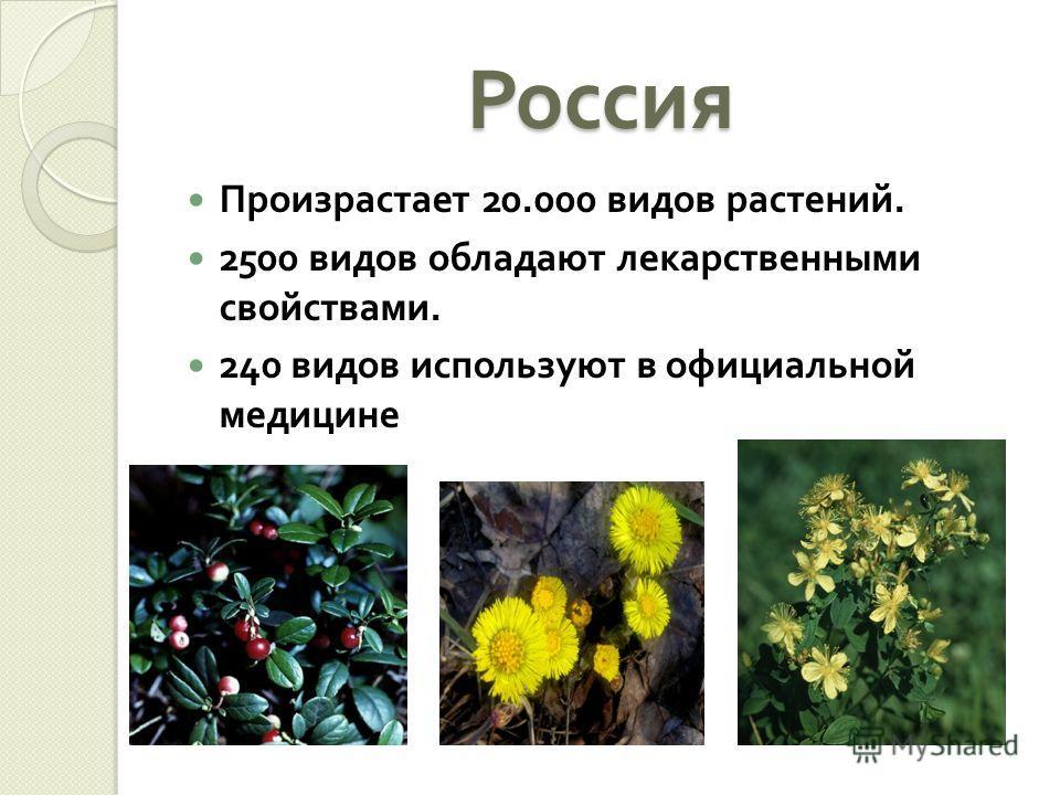 Россия Произрастает 20.000 видов растений. 2500 видов обладают лекарственными свойствами. 240 видов используют в официальной медицине