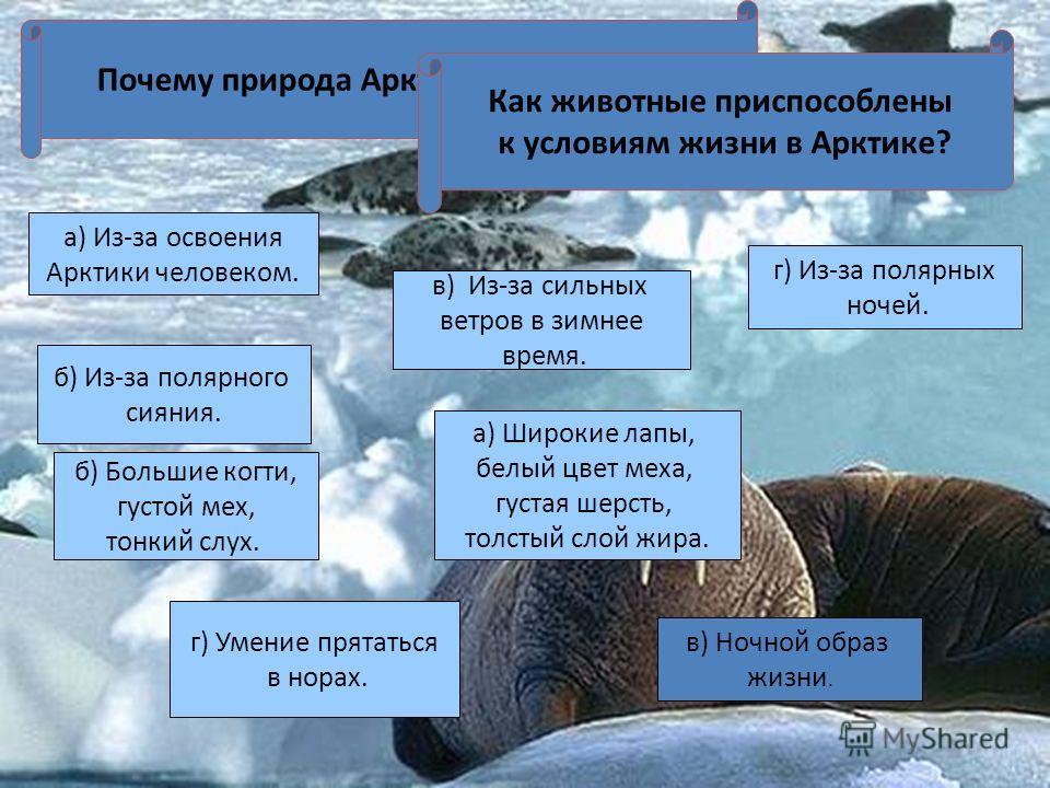 Почему природа Арктики в опасности? а) Из-за освоения Арктики человеком. г) Из-за полярных ночей. в) Из-за сильных ветров в зимнее время. б) Из-за полярного сияния. Как животные приспособлены к условиям жизни в Арктике? б) Большие когти, густой мех,