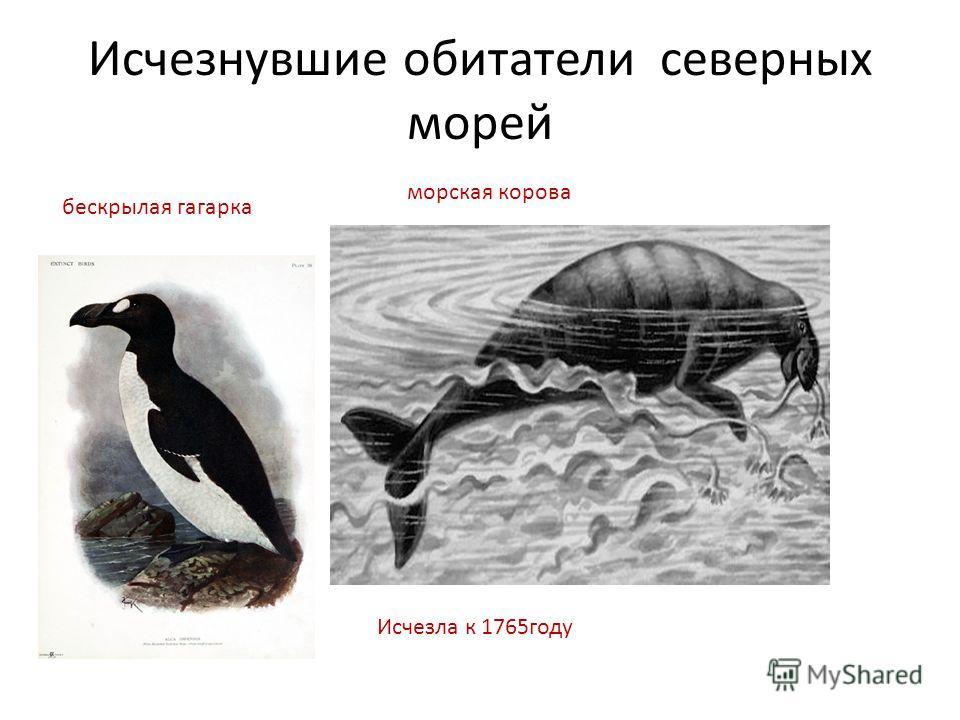 Исчезнувшие обитатели северных морей бескрылая гагарка морская корова Исчезла к 1765году