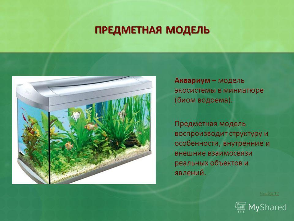 ПРЕДМЕТНАЯ МОДЕЛЬ Аквариум – модель экосистемы в миниатюре (биом водоема). Предметная модель воспроизводит структуру и особенности, внутренние и внешние взаимосвязи реальных объектов и явлений. Слайд 12