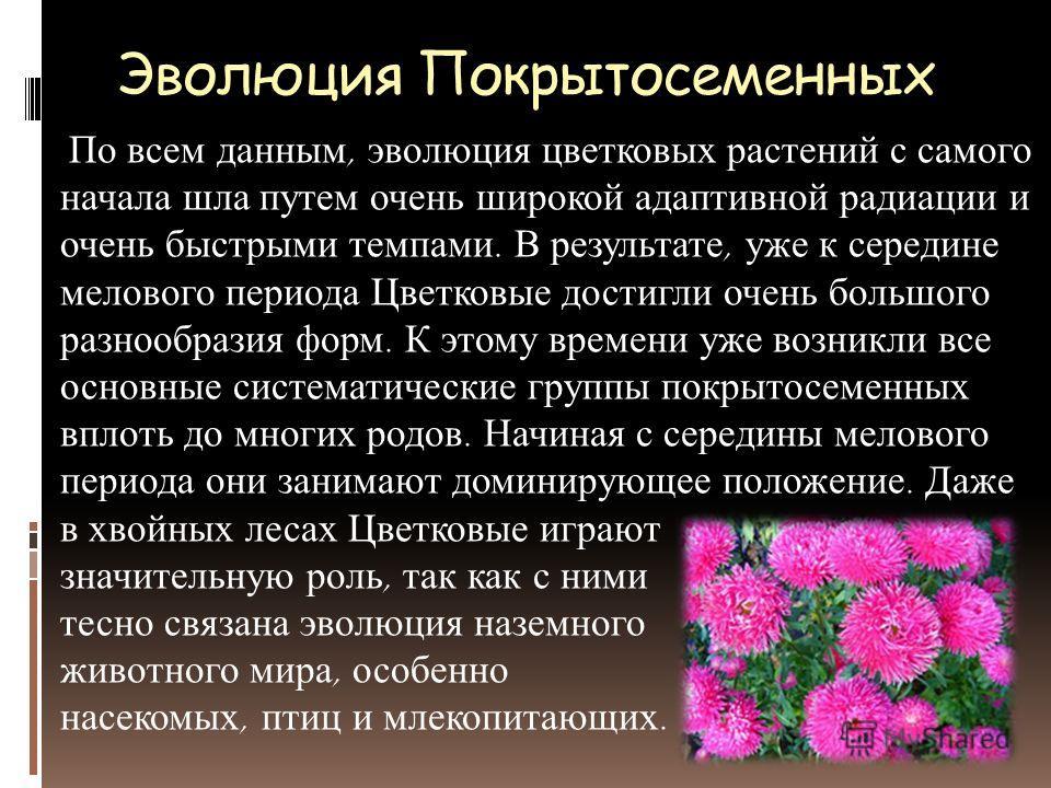 Эволюция Покрытосеменных По всем данным, эволюция цветковых растений с самого начала шла путем очень широкой адаптивной радиации и очень быстрыми темпами. В результате, уже к середине мелового периода Цветковые достигли очень большого разнообразия фо
