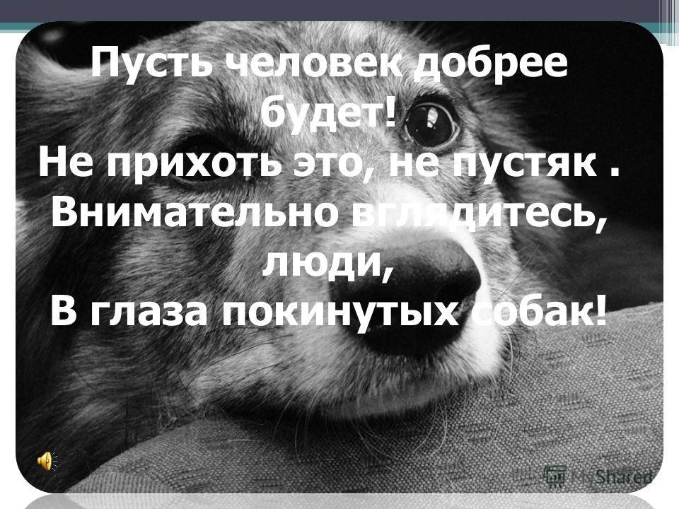 Пусть человек добрее будет! Не прихоть это, не пустяк. Внимательно вглядитесь, люди, В глаза покинутых собак!