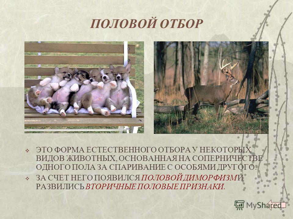 Формы естественного отбора  Параграф 145