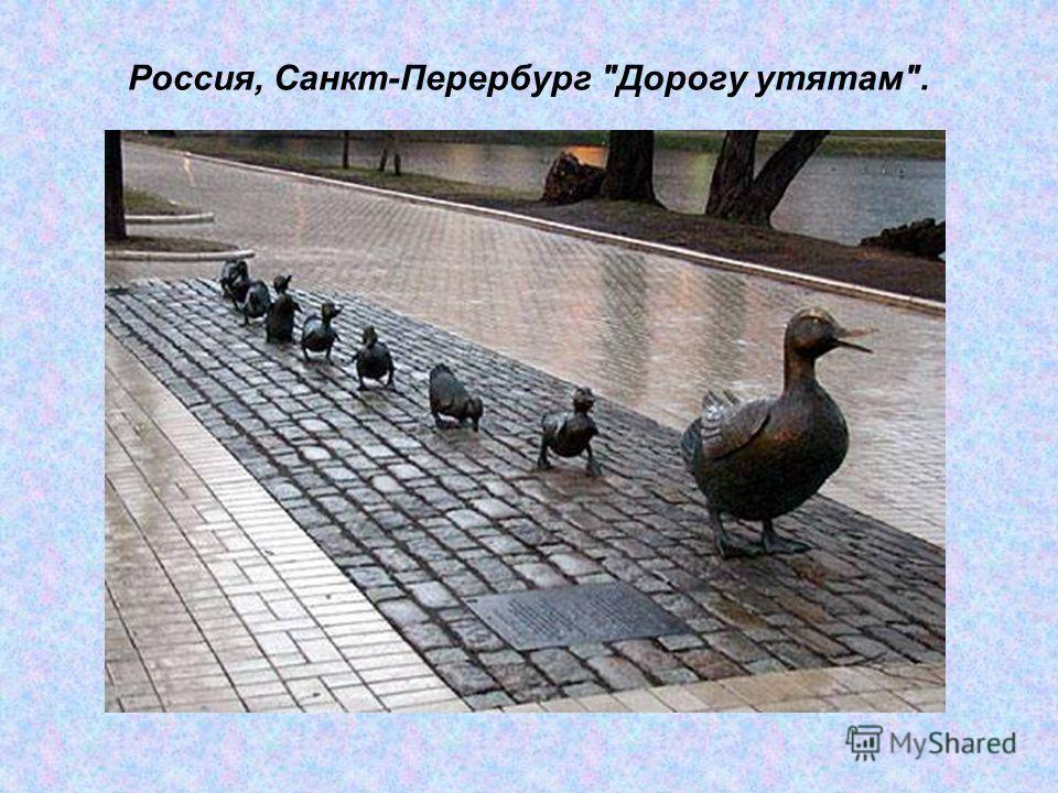 Россия, Санкт-Перербург Дорогу утятам.