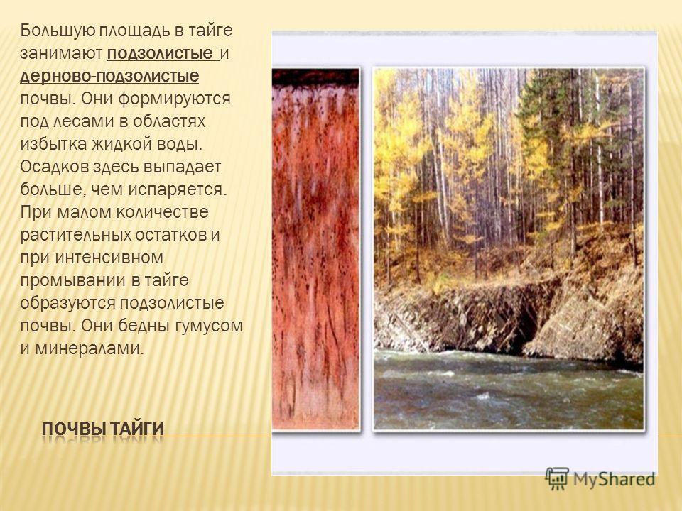 Большую площадь в тайге занимают подзолистые и дерново-подзолистые почвы. Они формируются под лесами в областях избытка жидкой воды. Осадков здесь выпадает больше, чем испаряется. При малом количестве растительных остатков и при интенсивном промывани