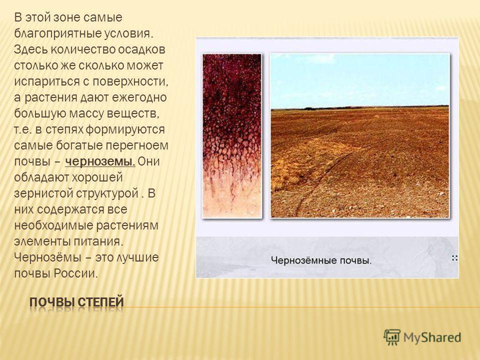 В этой зоне самые благоприятные условия. Здесь количество осадков столько же сколько может испариться с поверхности, а растения дают ежегодно большую массу веществ, т.е. в степях формируются самые богатые перегноем почвы – черноземы. Они обладают хор