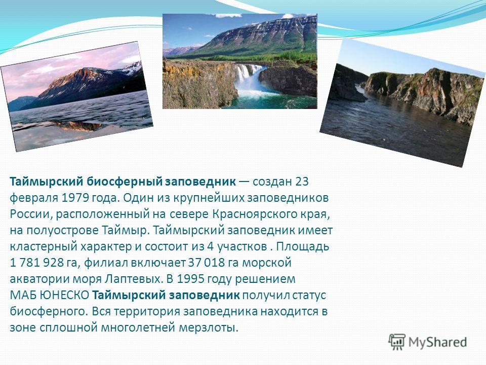 Таймырский биосферный заповедник создан 23 февраля 1979 года. Один из крупнейших заповедников России, расположенный на севере Красноярского края, на полуострове Таймыр. Таймырский заповедник имеет кластерный характер и состоит из 4 участков. Площадь