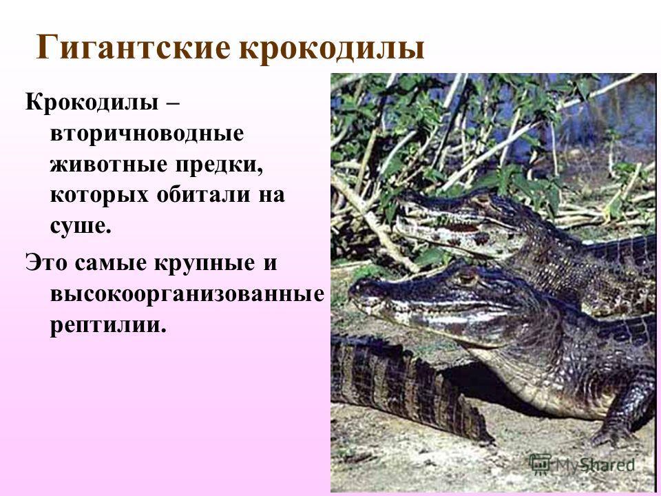 У наземных черепах панцирь легкий и тонкий, он хорошо защищает от врагов и потери влаги. Конечности приспособлены для хождения.
