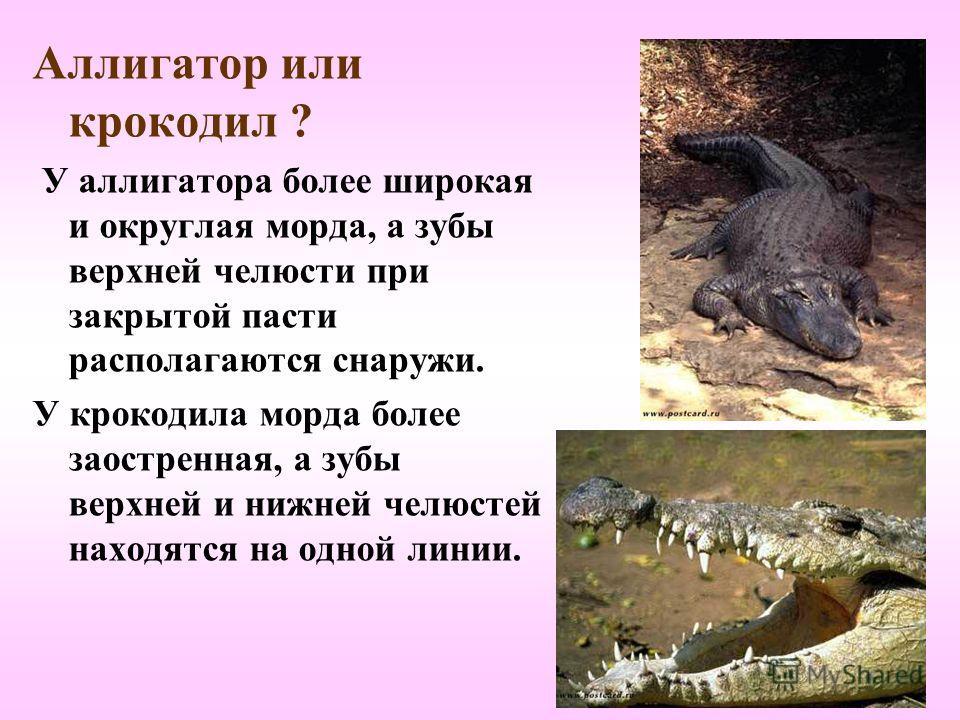 Среди крокодилов встречаются: Нильский крокодил – длина более 5-ти метров. Индийский гавиал – имеет длину до 6,5 метров и самую узкую и длинную среди всех крокодилов морду. Южно-американский кайман - длина 2-4 метра. Способен издавать разнообразные з