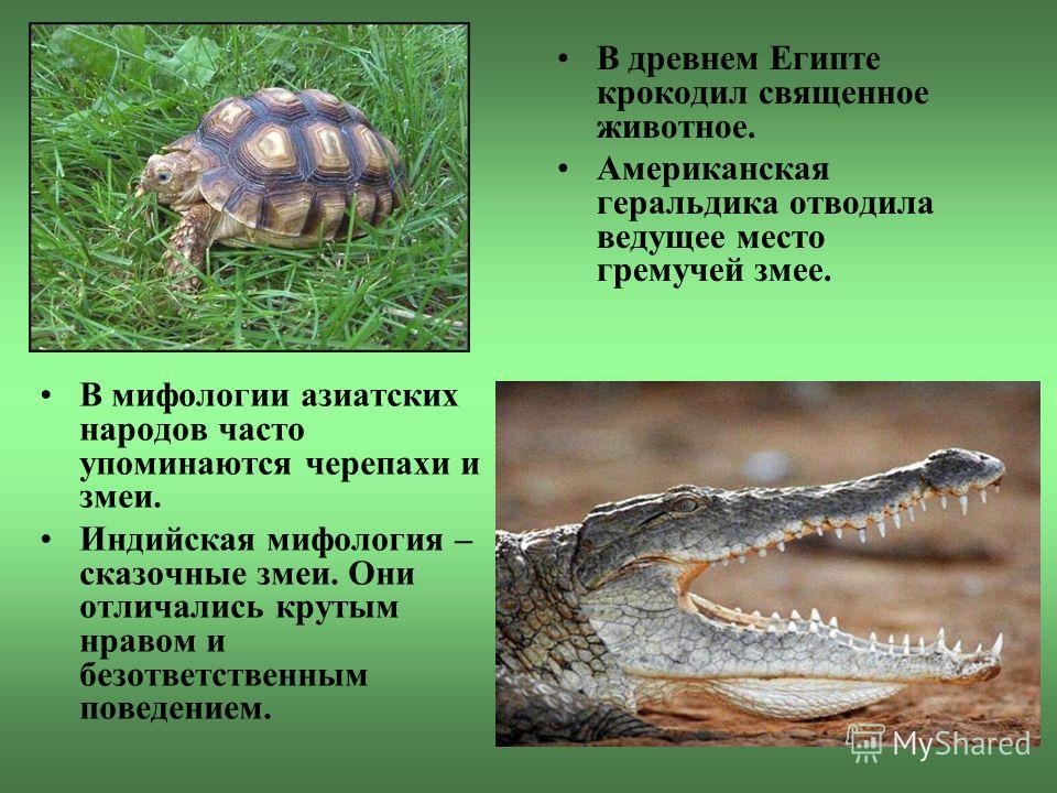 Наступление человека Рептилии и человек всегда много значили друг для друга. В прежние времена это была естественная экологическая связь, теперь же, когда мы являемся властелинами Земли, наше влияние на жизнь рептилий возросло. Однако история человек