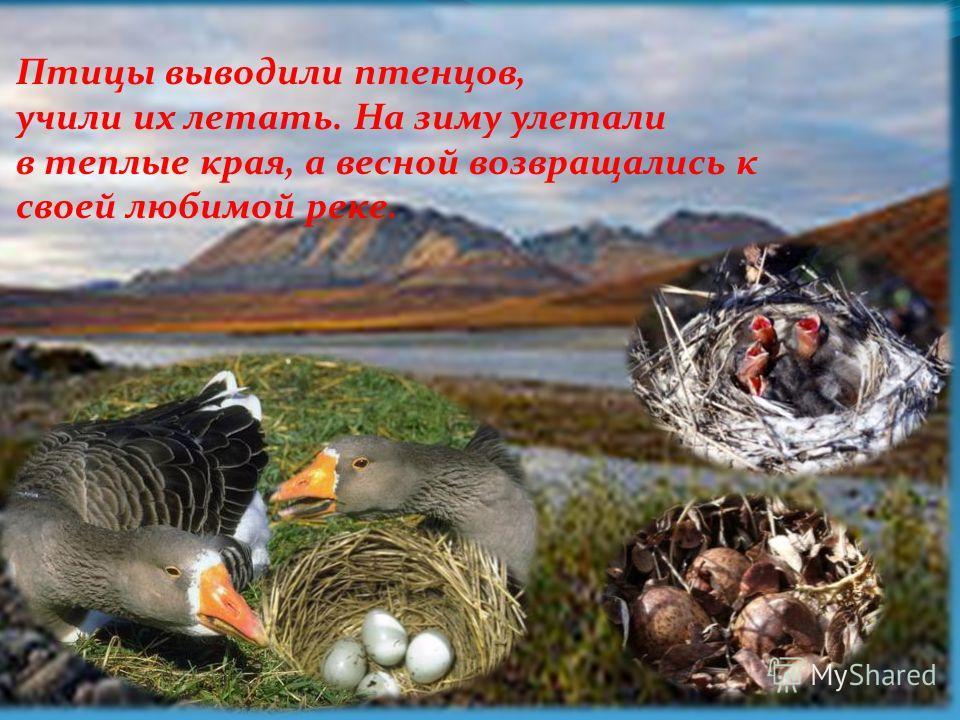 По ее берегам гнездились птицы, наслаждаясь тишиной и чистой, вкусной водичкой.