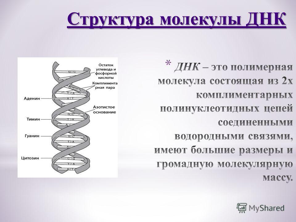 Структура молекулы ДНК Структура молекулы ДНК