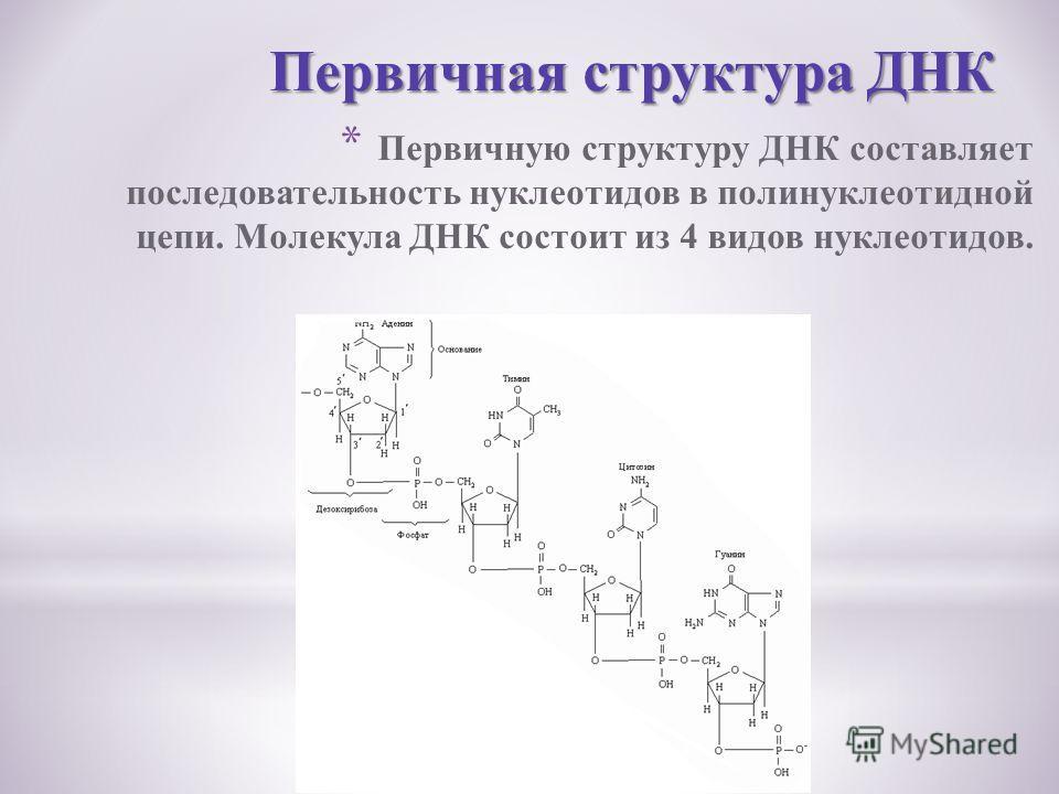 * Первичную структуру ДНК составляет последовательность нуклеотидов в полинуклеотидной цепи. Молекула ДНК состоит из 4 видов нуклеотидов. Первичная структура ДНК