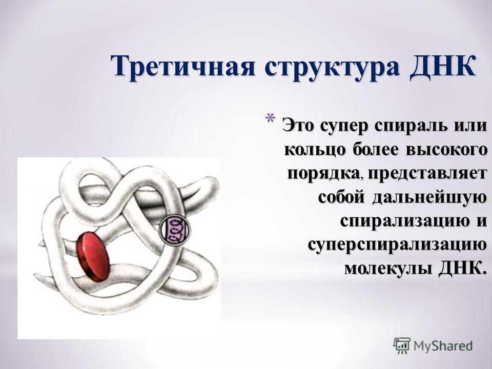 * Это супер спираль или кольцо более высокого порядка, представляет собой дальнейшую спирализацию и суперспирализацию молекулы ДНК. Третичная структура ДНК