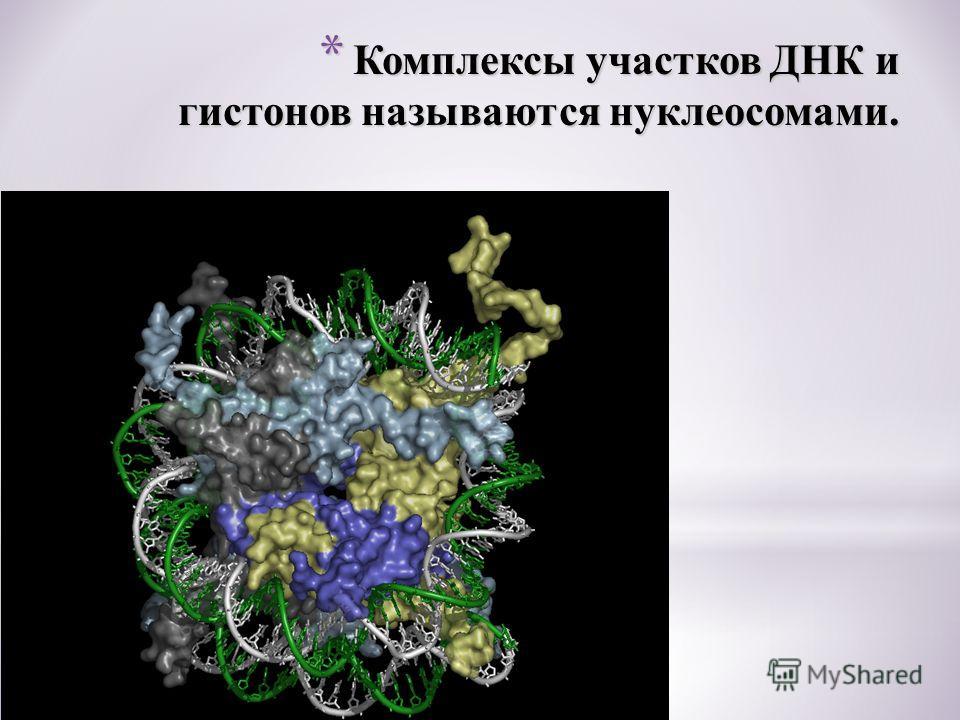* Комплексы участков ДНК и гистонов называются нуклеосомами.