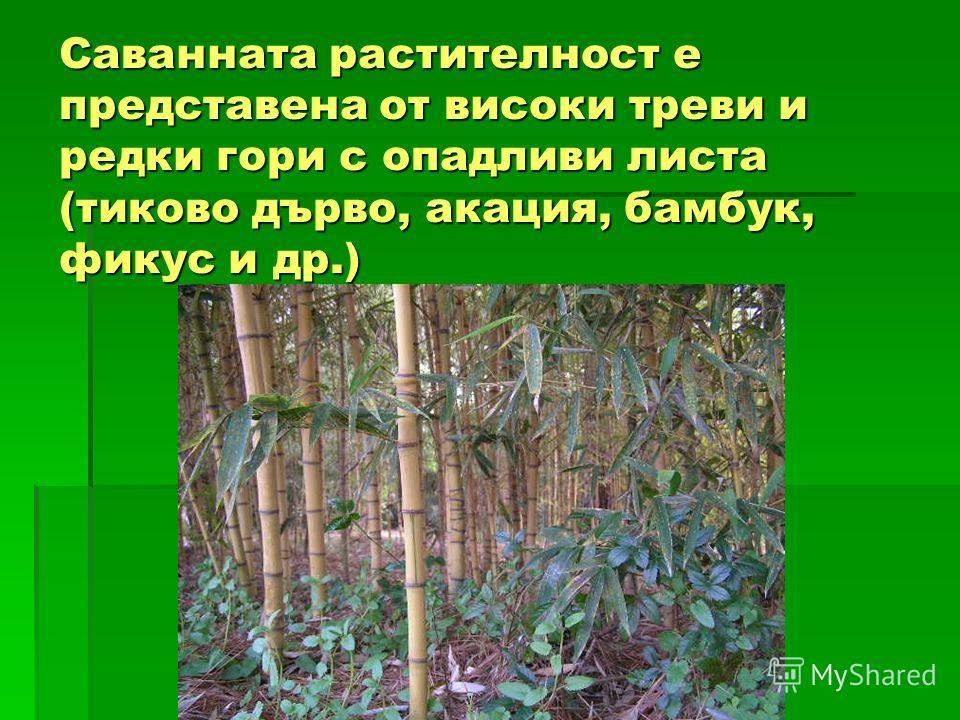 Саванната растителност е представена от високи треви и редки гори с опадливи листа (тиково дърво, акация, бамбук, фикус и др.)