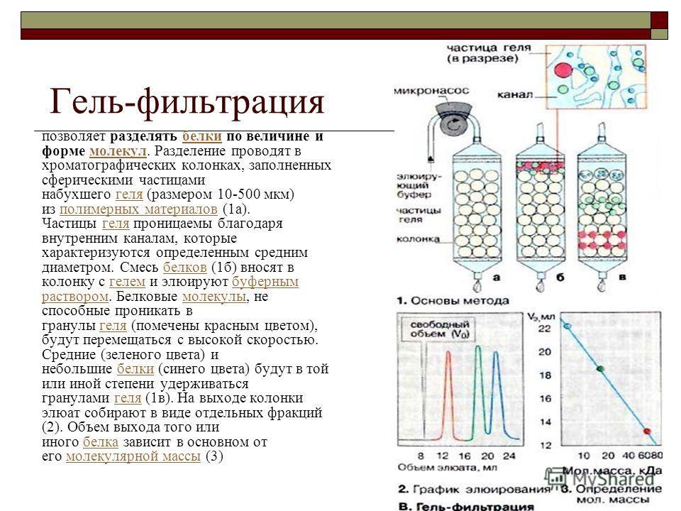 Гель-фильтрация позволяет разделять белки по величине и форме молекул. Разделение проводят в хроматографических колонках, заполненных сферическими частицами набухшего геля (размером 10-500 мкм) из полимерных материалов (1а). Частицы геля проницаемы б