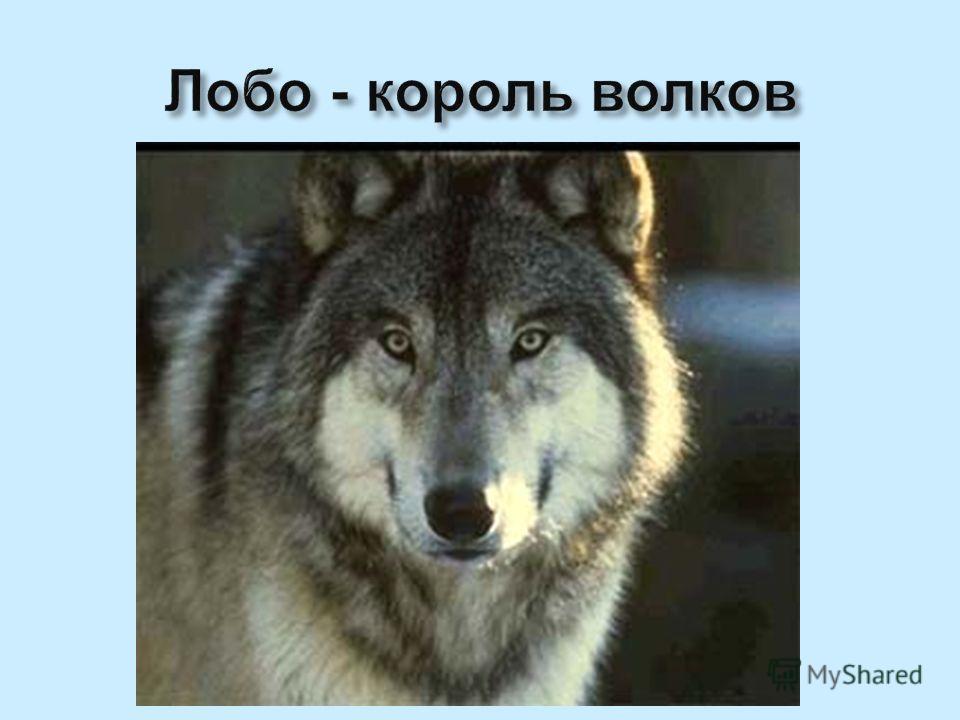 Лобо - король волков