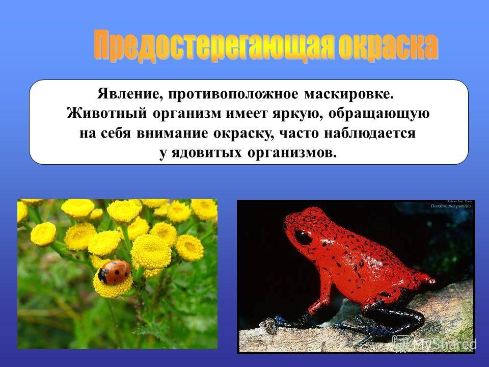Явление, противоположное маскировке. Животный организм имеет яркую, обращающую на себя внимание окраску, часто наблюдается у ядовитых организмов.