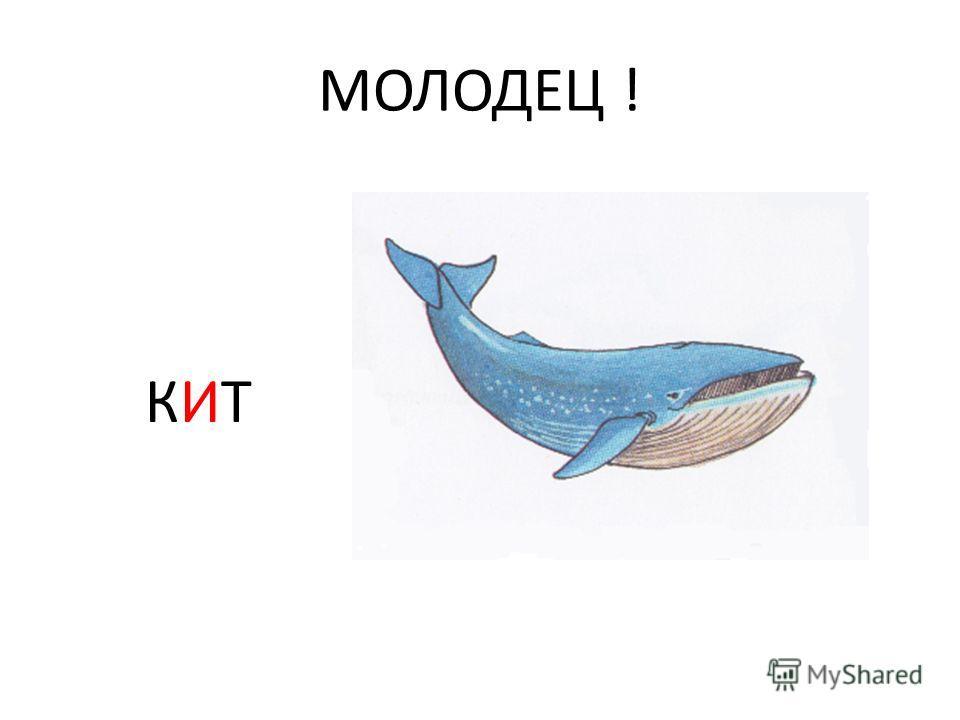 МОЛОДЕЦ ! КИТ