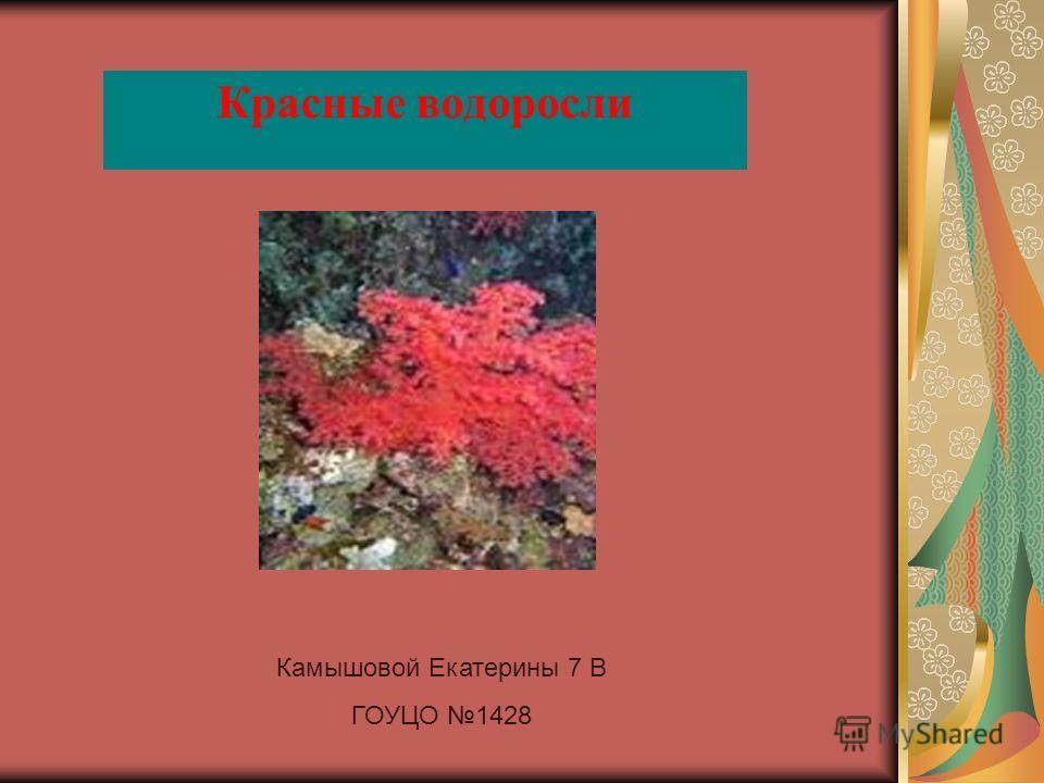 Красные водоросли Камышовой Екатерины 7 В ГОУЦО 1428