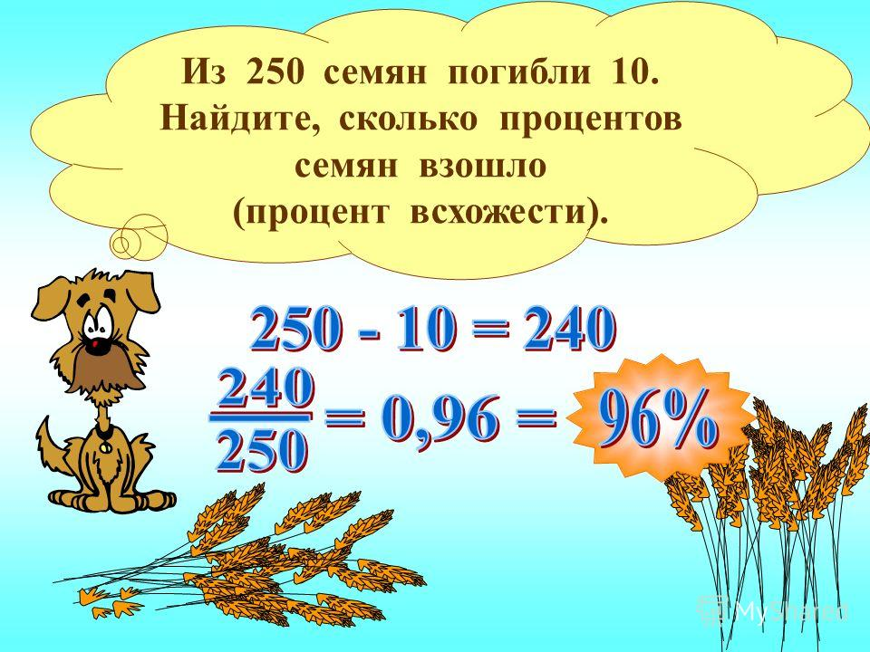 Из 250 семян погибли 10. Найдите, сколько процентов семян взошло (процент всхожести).