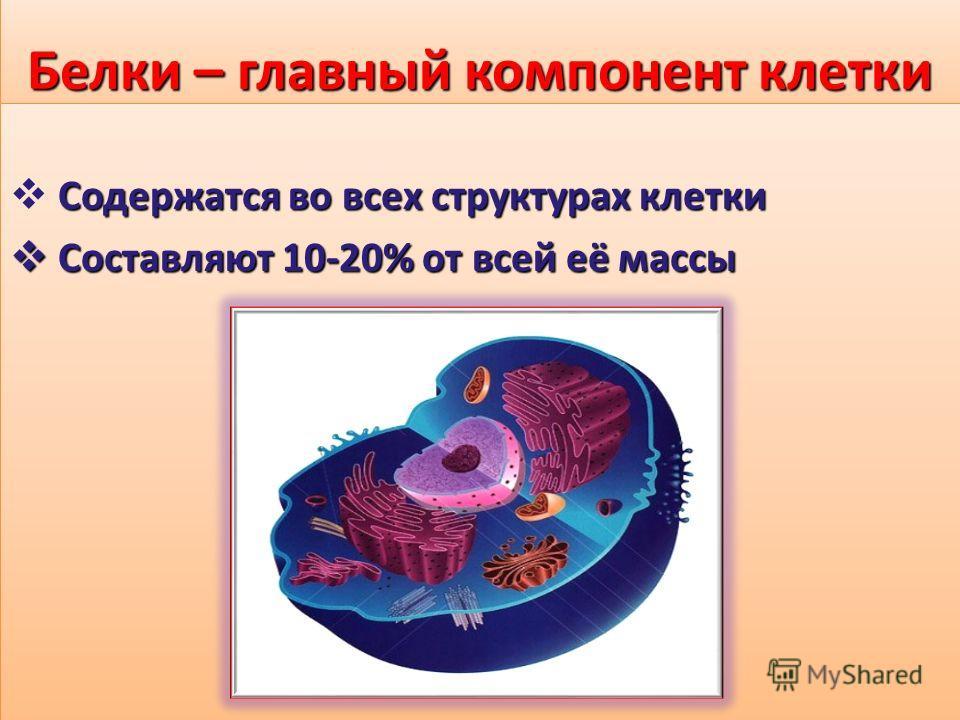 Белки – главный компонент клетки Содержатся во всех структурах клетки Составляют 10-20% от всей её массы Составляют 10-20% от всей её массы Содержатся во всех структурах клетки Составляют 10-20% от всей её массы Составляют 10-20% от всей её массы