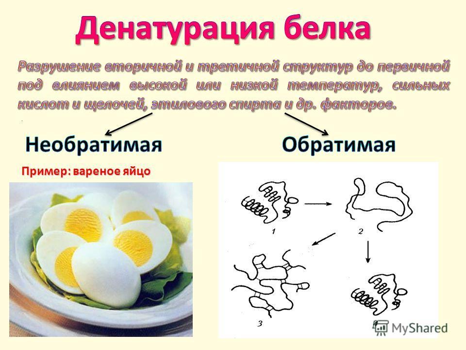 . Пример: вареное яйцо.