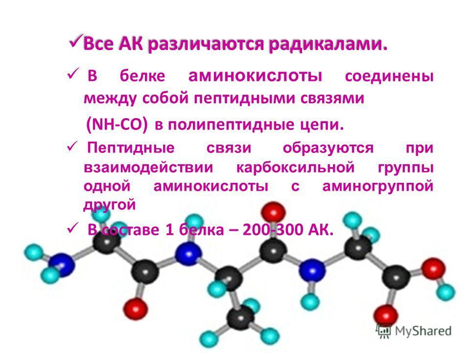 Все АК различаются радикалами. Все АК различаются радикалами. В белке аминокислоты соединены между собой пептидными связями ( NH-CO ) в полипептидные цепи. Пептидные связи образуются при взаимодействии карбоксильной группы одной аминокислоты с аминог