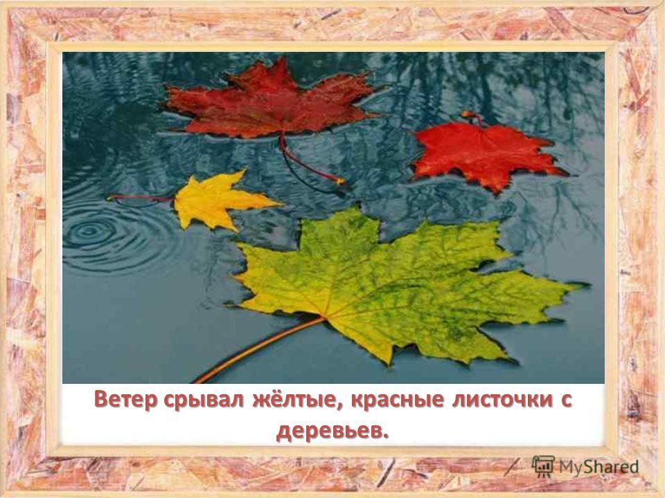 Ветер срывал жёлтые, красные листочки с деревьев.