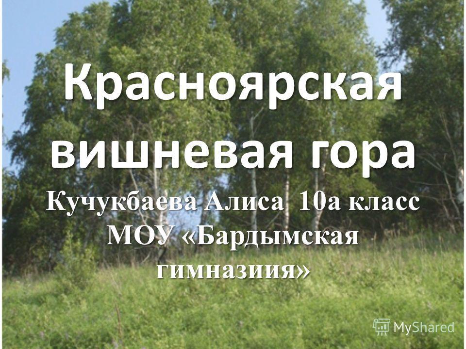 Красноярская вишневая гора Кучукбаева Алиса 10а класс МОУ «Бардымская гимназиия»