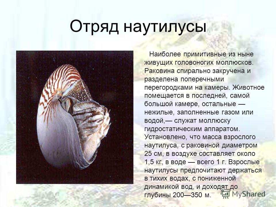 Отряд наутилусы Наиболее примитивные из ныне живущих головоногих моллюсков. Раковина спирально закручена и разделена поперечными перегородками на камеры. Животное помещается в последней, самой большой камере, остальные нежилые, заполненные газом или