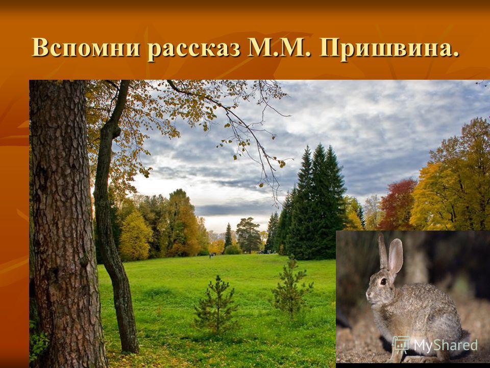 Вспомни рассказ М.М. Пришвина.