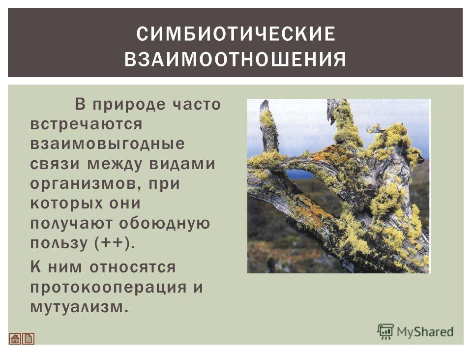 В природе часто встречаются взаимовыгодные связи между видами организмов, при которых они получают обоюдную пользу (++). К ним относятся протокооперация и мутуализм. СИМБИОТИЧЕСКИЕ ВЗАИМООТНОШЕНИЯ
