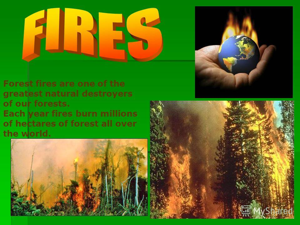 Forest fires are one of the greatest natural destroyers of our forests. Each year fires burn millions of hectares of forest all over the world.