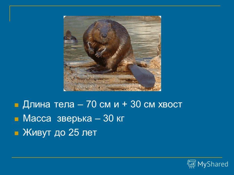 Длина тела – 70 см и + 30 см хвост Масса зверька – 30 кг Живут до 25 лет