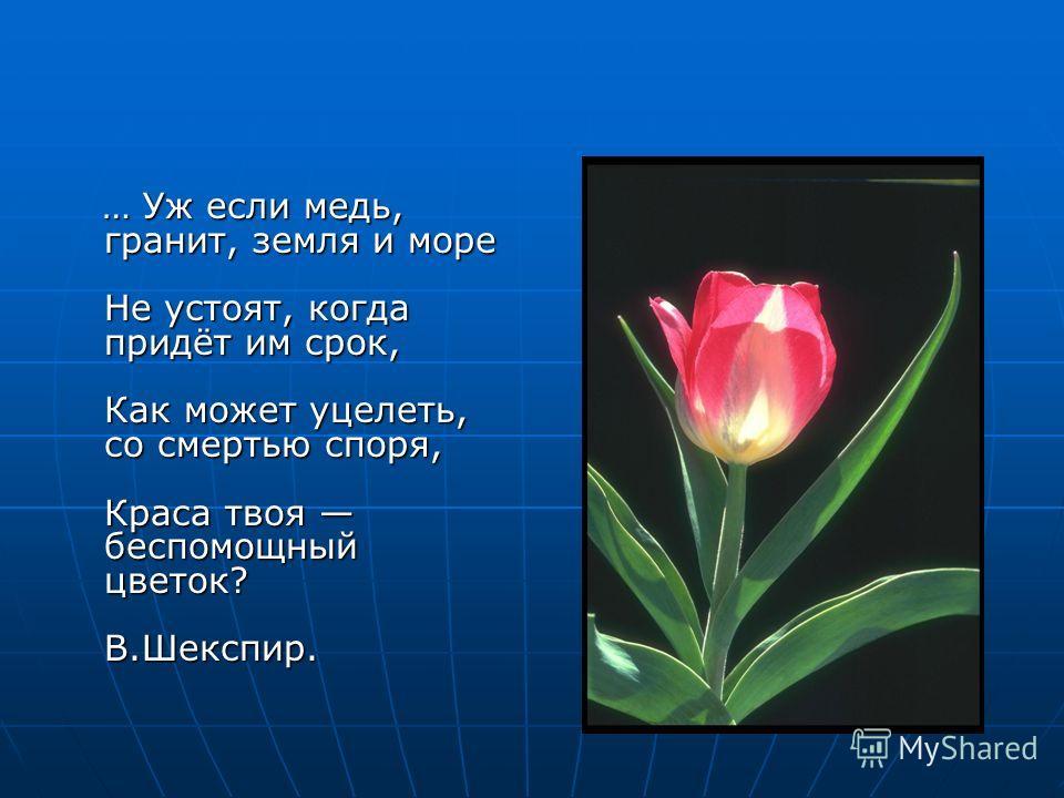 … Уж если медь, гранит, земля и море Не устоят, когда придёт им срок, Как может уцелеть, со смертью споря, Краса твоя беспомощный цветок? В.Шекспир.