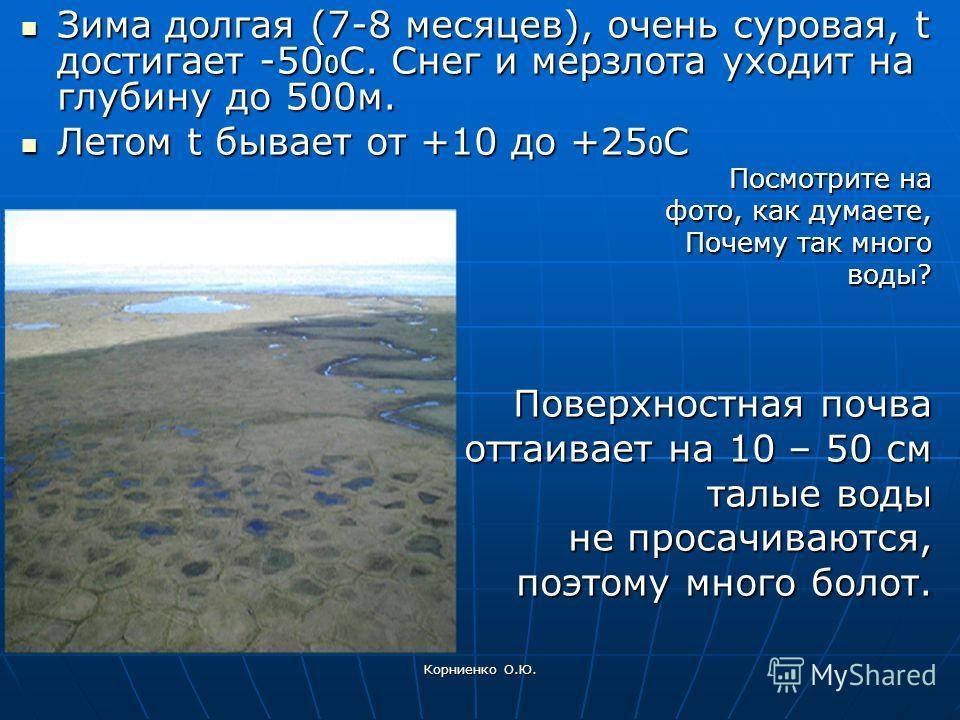 Корниенко О.Ю. Зима долгая (7-8 месяцев), очень суровая, t достигает -50 0 С. Снег и мерзлота уходит на глубину до 500м. Зима долгая (7-8 месяцев), очень суровая, t достигает -50 0 С. Снег и мерзлота уходит на глубину до 500м. Летом t бывает от +10 д