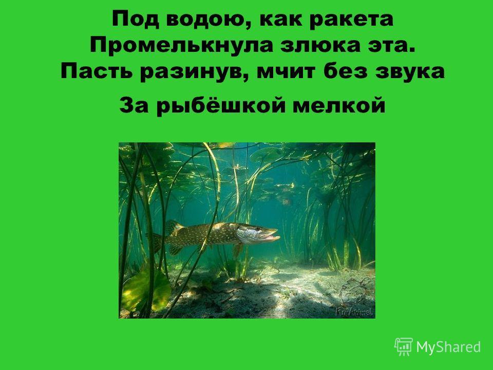 Под водою, как ракета Промелькнула злюка эта. Пасть разинув, мчит без звука За рыбёшкой мелкой