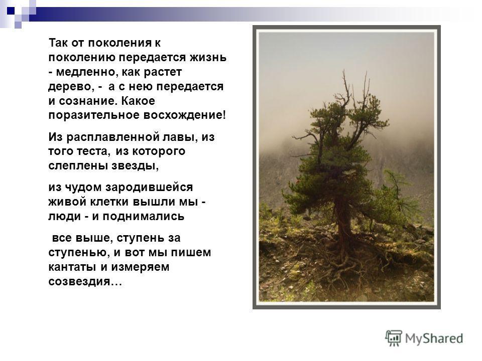 Так от поколения к поколению передается жизнь - медленно, как растет дерево, - а с нею передается и сознание. Какое поразительное восхождение! Из расплавленной лавы, из того теста, из которого слеплены звезды, из чудом зародившейся живой клетки вышли