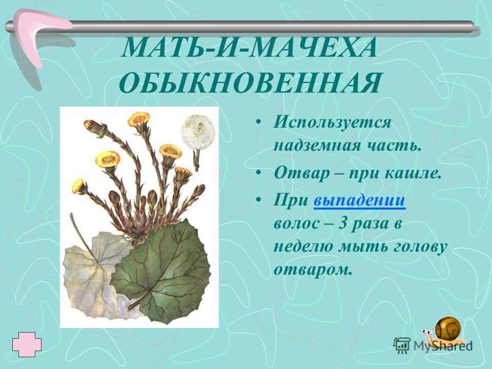 МАЛИНА ОБЫКНОВЕННАЯ Используют плоды. В виде чая - потогонное средство при простуде.