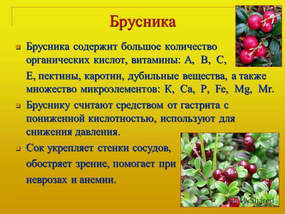 Брусника Брусника содержит большое количество органических кислот, витамины: А, В, С, Брусника содержит большое количество органических кислот, витамины: А, В, С, Е, пектины, каротин, дубильные вещества, а также множество микроэлементов: К, Са, P, Fe