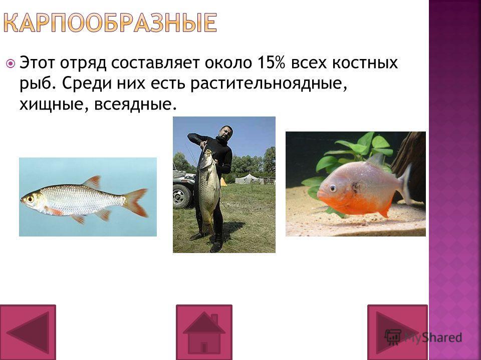 Этот отряд составляет около 15% всех костных рыб. Среди них есть растительноядные, хищные, всеядные.