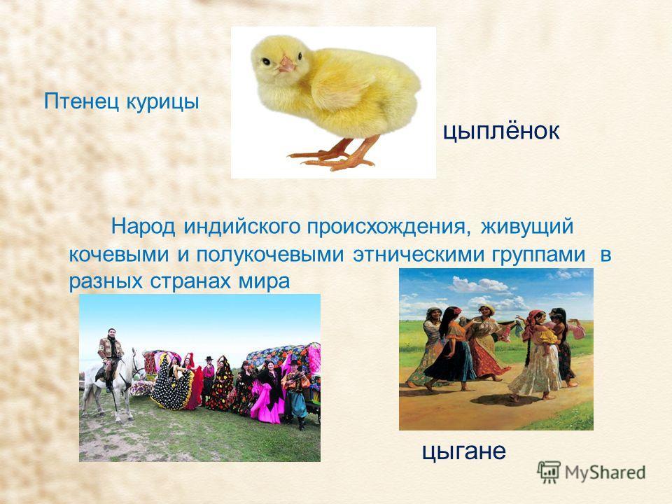 Птенец курицы Народ индийского происхождения, живущий кочевыми и полукочевыми этническими группами в разных странах мира цыплёнок цыгане