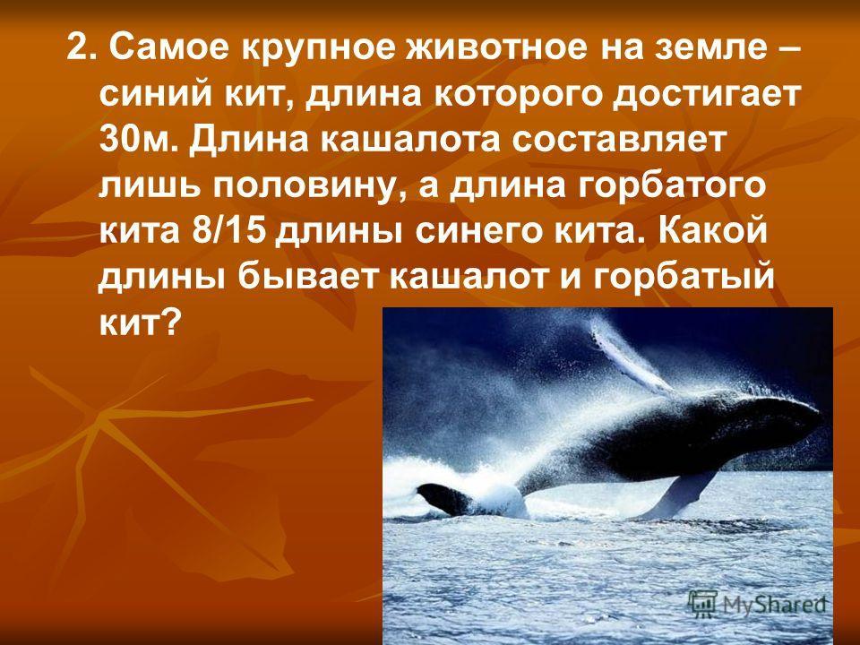2. Самое крупное животное на земле – синий кит, длина которого достигает 30м. Длина кашалота составляет лишь половину, а длина горбатого кита 8/15 длины синего кита. Какой длины бывает кашалот и горбатый кит?