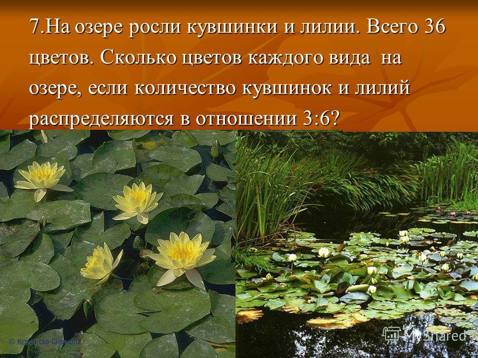 7.На озере росли кувшинки и лилии. Всего 36 цветов. Сколько цветов каждого вида на озере, если количество кувшинок и лилий распределяются в отношении 3:6?